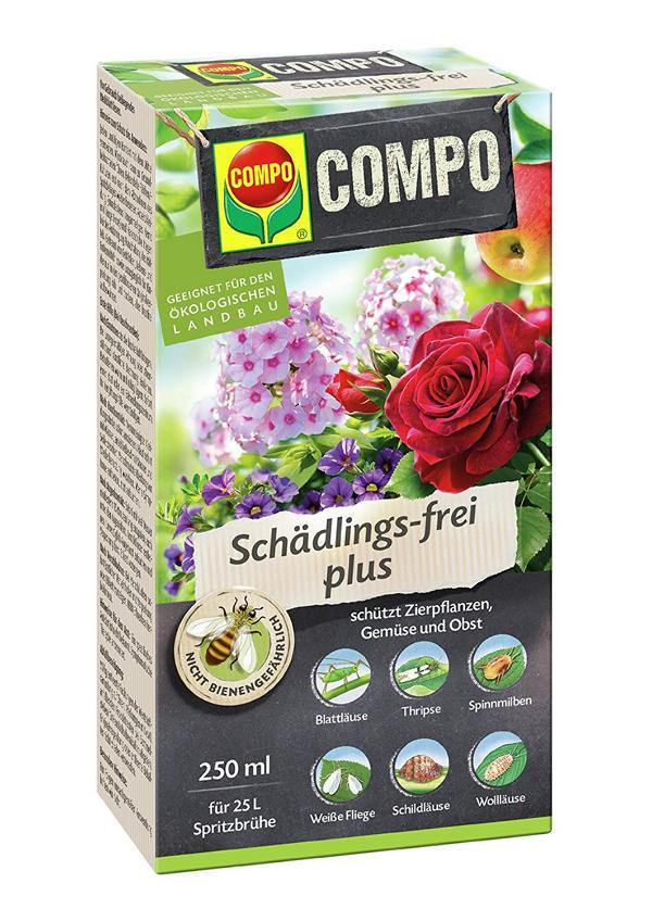 Chrysanthemenblüte Rapsöl Insektizid gegen Blattläuse